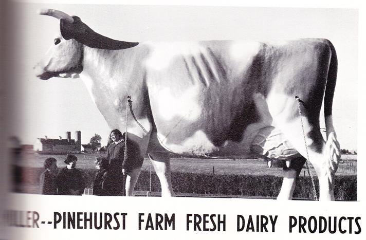 Millie The Mighty Cow, 15' fiberglass symbol of Muller-Pinehurst Dairy at Lockwood Park / Children's Farm